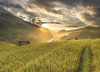 Herbicyd do walki z chwastami dwuliściennymi